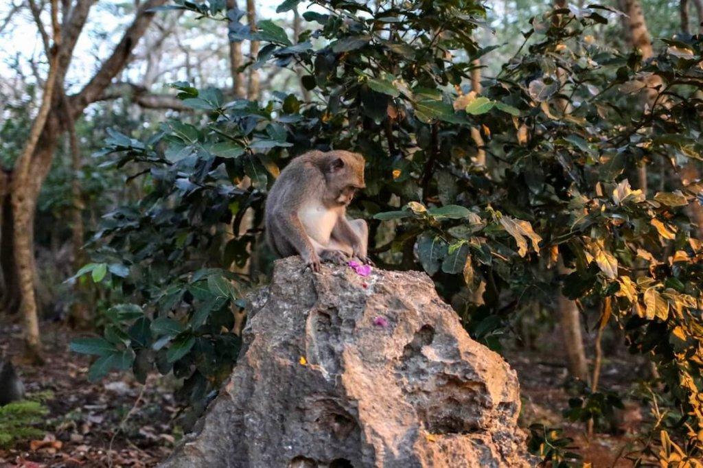 Pura Luhur Uluwatu Metropolitan Monkey